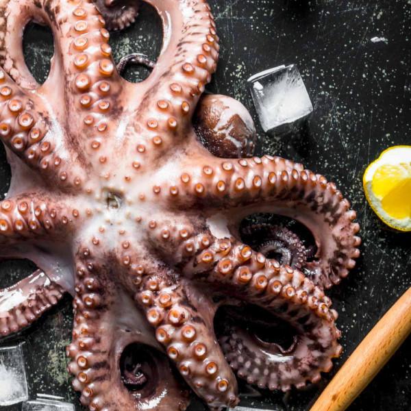 Oktopus ganz - 1,8 Kg